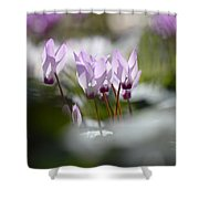 Cyclamen At Lachish 1 Shower Curtain
