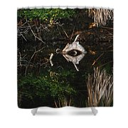 Cyclops In Reflection Shower Curtain