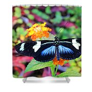 Cydno Longwing Butterfly Shower Curtain
