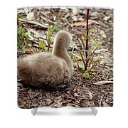 Cygnet I Shower Curtain