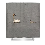 Cygnet Swim Shower Curtain