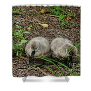 Cygnets Shower Curtain