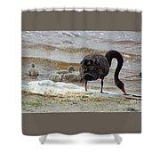 Cygnus Atratus Iv Shower Curtain