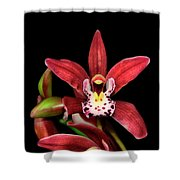 Cymbidium Orchid 001 Shower Curtain