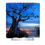 Cypress At Night Shower Curtain