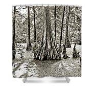 Cypress Evening Shower Curtain
