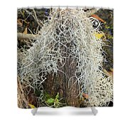 Cypress Knee Draped With Moss Shower Curtain