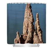 Cypress Knees Shower Curtain