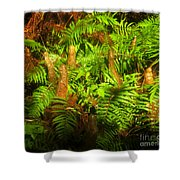Cypress Knees In Ferns Shower Curtain