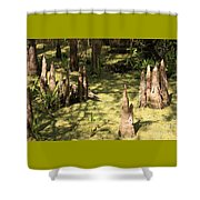 Cypress Knees In Green Swamp Shower Curtain