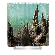 Cypress Knees In The Mist Shower Curtain