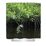 Cypress Leaves And Fluted Trunks Shower Curtain