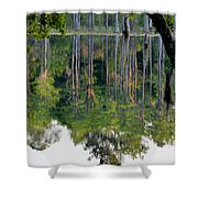 Cypress Pond Shower Curtain