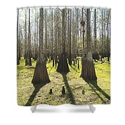 Cypress Sentinals Shower Curtain