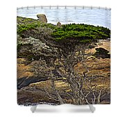 Cypress Tree In Point Lobos State Reserve Near Monterey-california  Shower Curtain