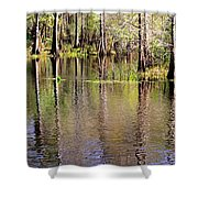 Cypress Trees Along The Hillsborough River Shower Curtain by Carol Groenen