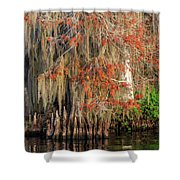 Cypress Winter Colors Shower Curtain