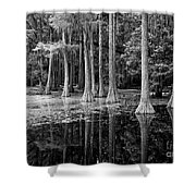 Cypresses In Tallahassee Black And White Shower Curtain