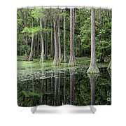 Cypresses In Tallahassee Shower Curtain