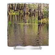 Cypresses Reflection Shower Curtain