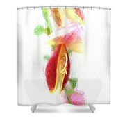 Cytisus Scoparius Firefly Ginster Shower Curtain