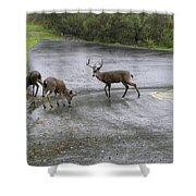 D-a0033 Mule Deer Shower Curtain