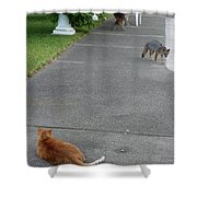 D-a0050-dc Gray Fox And Our Cat On Our Pool Deck Shower Curtain