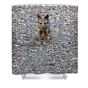 D-a0051-dc Gray Fox Pup Shower Curtain
