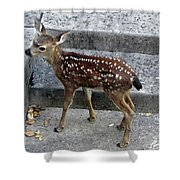 D-a0069 Mule Deer Fawn On Our Property On Sonoma Mountain Shower Curtain