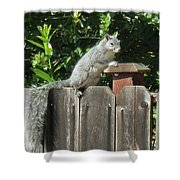D-a0071-e-dc Gray Squirrel On Our Fence Shower Curtain