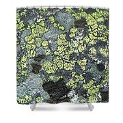 D07343-dc Lichen On Rock Shower Curtain