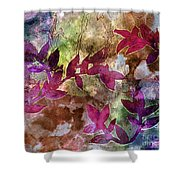 D231116 Shower Curtain