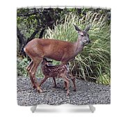 D2b6314 Fawn And Deer Mom Shower Curtain