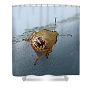D2b6336-dc Colorful Insect On Sonoma Mountain Shower Curtain