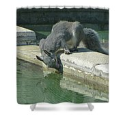 D2b6341-dc Gray Squirrel Drinking From The Pool Shower Curtain