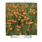 d7b6307 California Poppies Shower Curtain