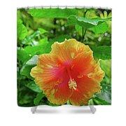 D9m-23 Orange Flower Shower Curtain