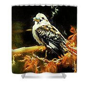 Kookaburra Kingfisher Dacelo-novaeguineae Shower Curtain