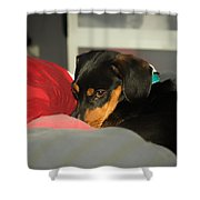 Dachshund Dog, Pug Dog, Good, Time, Bed, Sleeping, Relaxing Time Shower Curtain