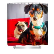 Dachshund Dog, Pug Dog, Good Time On Bed Shower Curtain