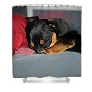 Dachshund Dog, Pug Dog, Good Time On Bed, Sleeping Shower Curtain