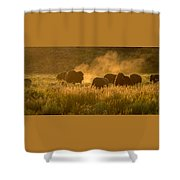 Daddy Bull And The Rut Shower Curtain