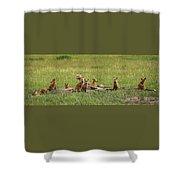 Daddy's Foxy Daycare Shower Curtain