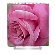 Daddy's Rose Shower Curtain