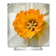 Daffodil Narcissus Flower Shower Curtain