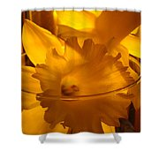 Daffodiil Flowers Evening Glow 9 Contemporary Modern Art Print Giclee Shower Curtain