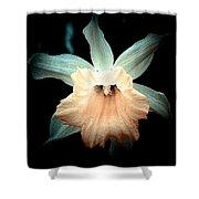 Daffodil #19 Shower Curtain