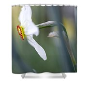 Daffodil 3 Shower Curtain
