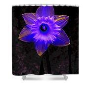 Daffodil 4 Shower Curtain