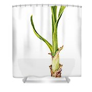 Daffodil And Bulb Shower Curtain